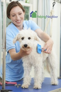 Secrets to Health Nutrition Monitoring of Pets